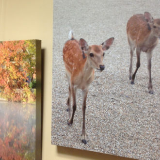 Town Hall now exhibiting photographs by member artist Janine Turgeon